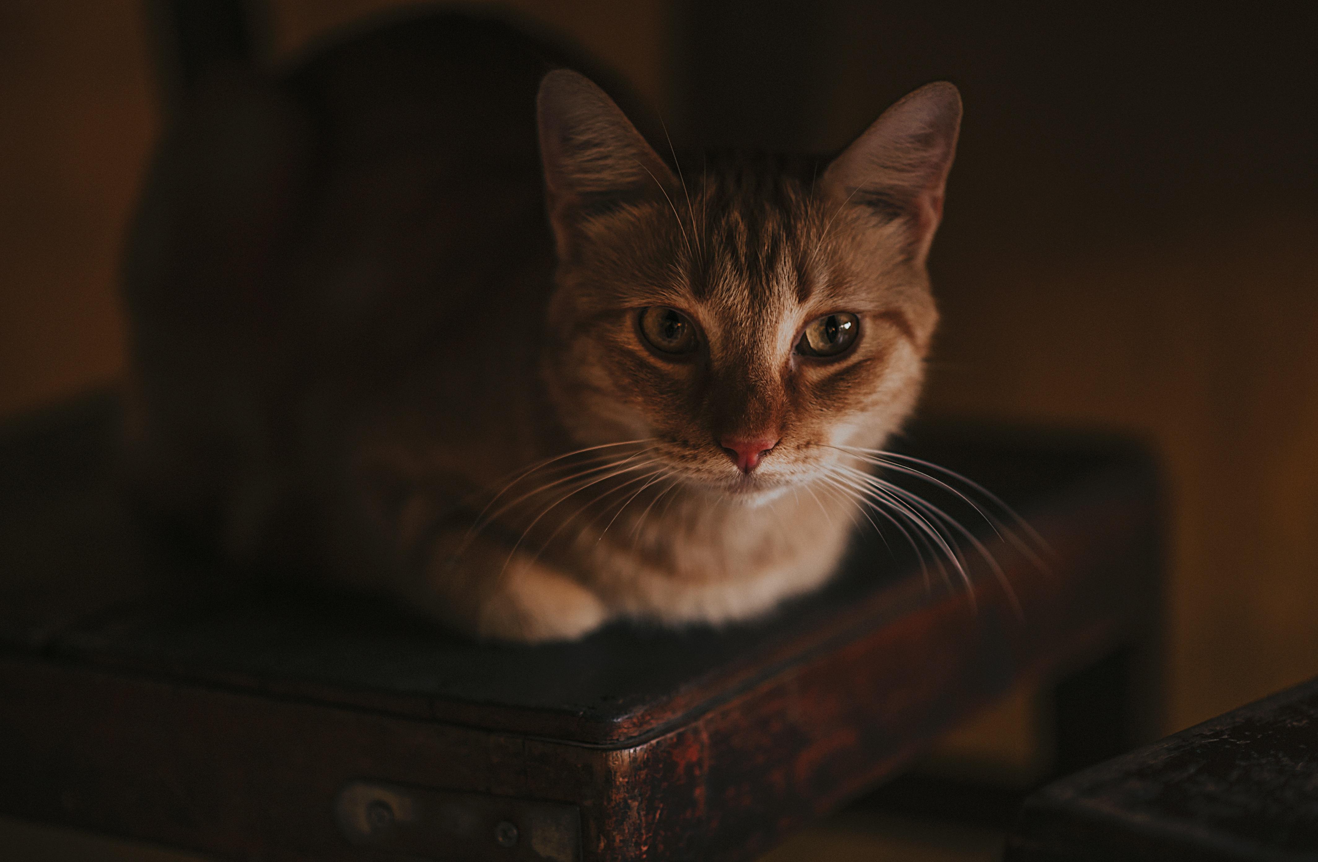 cat-3591380